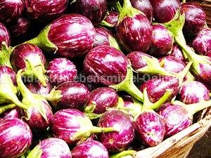 brinjal-indian-fresh-vegetable-egg-plant