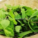 mint-leaves-fresh-pudhina-podina