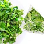 coriander-leaves-fresh-hara-dhania